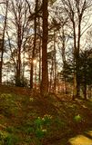 Northumberland nella primavera Immagine Stock Libera da Diritti