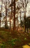 Northumberland w wiośnie Obraz Royalty Free