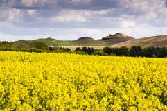 Northumberlandia над полем rapeseed Стоковые Фотографии RF