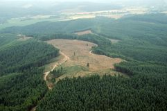 Northwest Clearcut Royalty Free Stock Images