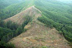 Northwest Clearcut Royalty Free Stock Photo