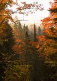 Northwoods Autumn Dawn Stock Photos