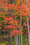 Northwoods Autumn Royalty Free Stock Photography