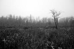 Northwoods Bog Stock Images