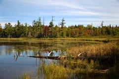 Northwoods Lake Royalty Free Stock Photo