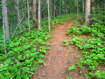 Northwoods Michigan Hiking Trail Stock Photo