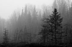 Northwoods-Sumpf Stockbild