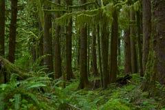 Nortwest US Rainforest Arkivfoto