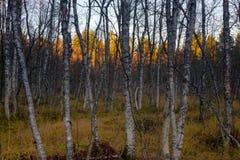 Noruega septentrional fotografía de archivo libre de regalías