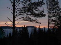 Noruego Forrest Fotografía de archivo