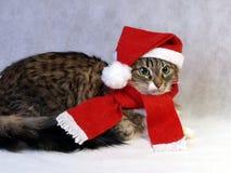Norvégien de Noël de chat Photographie stock libre de droits