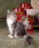 Norvegian木头猫 免版税库存图片