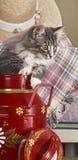 Norvegian木头小猫 图库摄影
