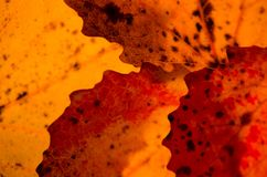 Close up textures of autumn leaves Stock Photos