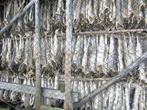 Norway, dried fish Lutefisk Royalty Free Stock Photography