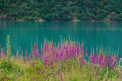 Norway fjord with flowers Royalty Free Stock Photography