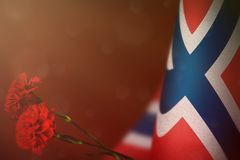 Norway flag for honour of veterans or memorial day with two red carnation flowers. Glory to Norway heroes of war concept on red. Norway flag with two red royalty free stock image