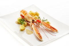 Norway lobster Royalty Free Stock Photography