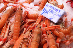 Norway lobster royalty free stock images