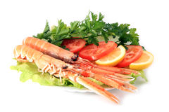 Norway lobster Stock Photo
