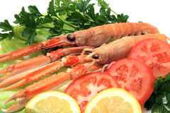 Norway lobster Stock Photos