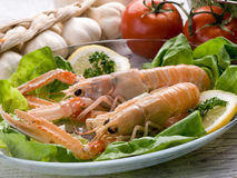 Norway lobster with salad Stock Images