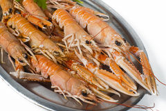 Norway lobster Stock Photography