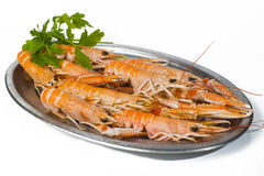 Norway lobster Stock Images