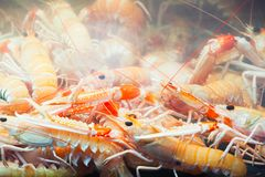 Norway lobsters in aquarium, Bergen. Norway lobsters in aquarium on seafood market in Bergen, Norway Stock Photography