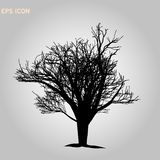 Norway maple architectonics. The structure of the tree branches and trunk. Vector drawing of the tree on a white background eps 10. Norway maple architectonics royalty free stock photo