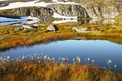 Norway Mountain Meadow in Spring royalty free stock photo