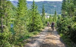 Norway mountain road passes through the forest royalty free stock images