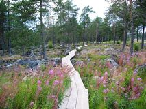 Norway. A path thru a national park in Norway Stock Photos