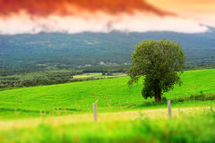 Norway toy landscape with lone tree background Royalty Free Stock Images