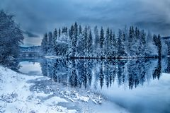 Norway trees relfection stock photography