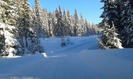 norway vinter Royaltyfria Foton