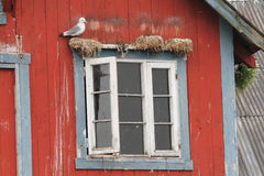 Norway window seagull Royalty Free Stock Images