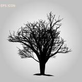 Norwegen-Ahorn architectonics Die Struktur der Baumaste und des Stammes Vektorzeichnung des Baums auf einem wei?en Hintergrund EN lizenzfreies stockfoto