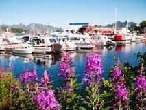 Norwegia lata sceneria Obrazy Stock