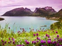 Norwegia natury sceneria Zdjęcie Stock
