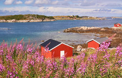 Norwegian bay at low tide, around flowers Rosebay Willowherb Stock Photos