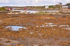 Norwegian bay at low tide Stock Image