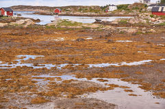 Norwegian bay at low tide Royalty Free Stock Photography