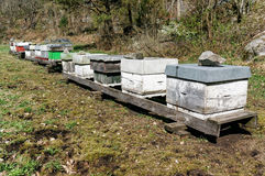 Norwegian Bee apiary. Beehives on the grounds of Norwegian bee apiary. Early spring in southern Norway stock photo