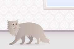 Norwegian cat. Cat walking around the house Royalty Free Stock Photography