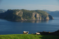 Norwegian coast. Idyllic landscape in Western Norway Stock Images