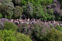 Norwegian Constitution Day crowd in park. OSLO - MAY 17: Norwegian Constitution Day is the National Day of Norway and is an official national holiday observed on Stock Photos