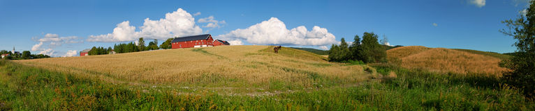 Norwegian Farm Panorama 1. Panoramic view of a typical Norwegian farm with oats field, horses and a nice cloudscape. Composed from 16 individual shots Stock Photos
