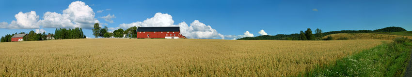 Norwegian Farm Panorama 2. Panoramic view of a typical Norwegian farm with oats field and a nice cloudscape. Composed from 19 individual shots Royalty Free Stock Photography