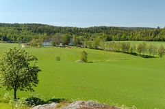 Norwegian Field Landscape. A Norwegian summer landscape. Picture is taken near Losby, not far from Oslo Stock Image